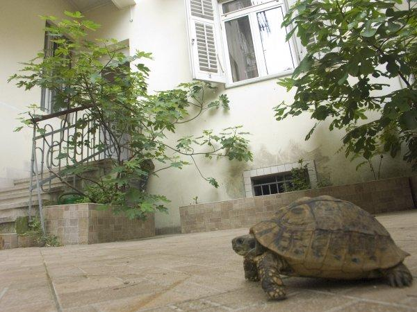 Auberge Split Guesthouse &