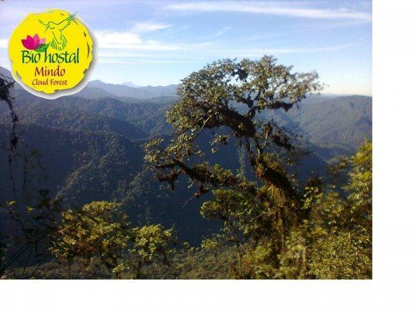 Biohostal Mindo Cloud Forest