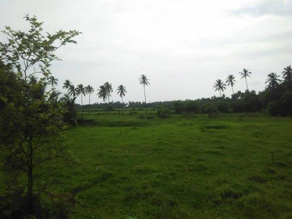 Auberge Bollywood Backyard