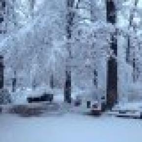 Forest Mirage