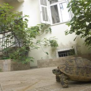 Auberges de jeunesse - Auberge Split Guesthouse &