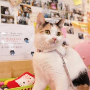 Auberges de jeunesse - Auberge Hi Korea  Beak Sajang