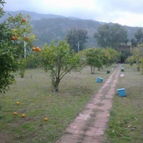 Auberges de jeunesse - Cafe Camping Cirali